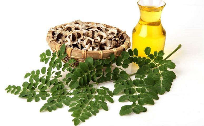 photo-of-moringa-leaves.jpg