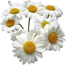 photo-of-chamomile-flowers.jpg