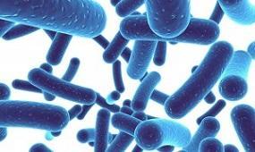 photo-of-lactobacillus-acidophilus.jpg