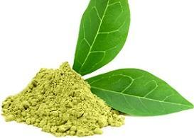 photo-of-green-tea-extract.jpg