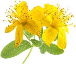 photo-of-st-johns-wort-flower.jpg