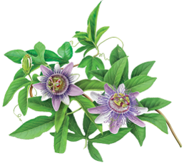 photo-of-passionflower-plant.png