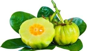 Photo of Fresh Garcinia Fruit