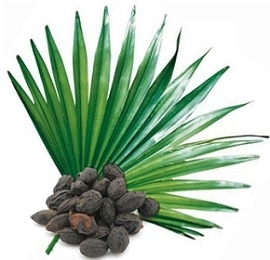 Photo of Saw Palmetto Plant