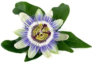 Passionflower for Anxiety